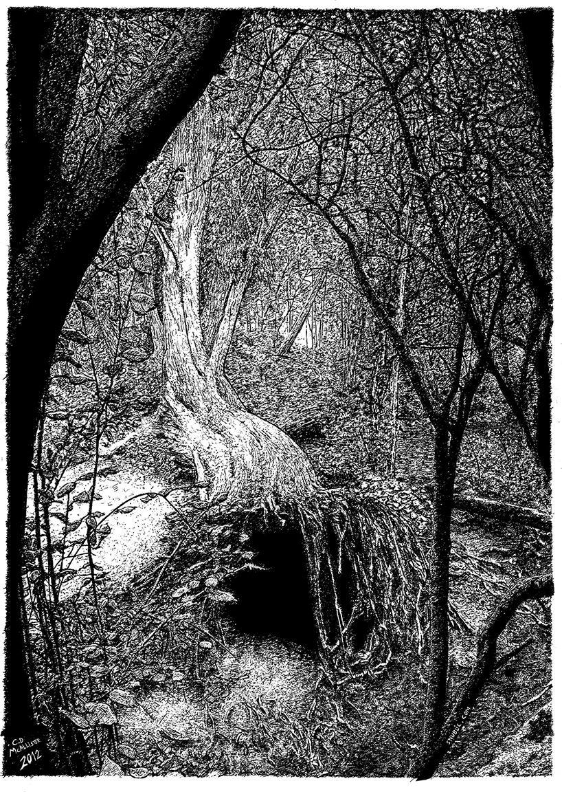 Indian Ink on paper. 12 H x 10 W in.  View of a fallen tree in Highwoods Country Park Colchester.  Signed limited edition (100) Giclee prints available. (£60) 12 H x 10 W in snublic